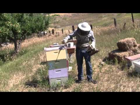 Organic Beekeeping 101 - Video 1 of 38 - Full Course at Organic Life Guru