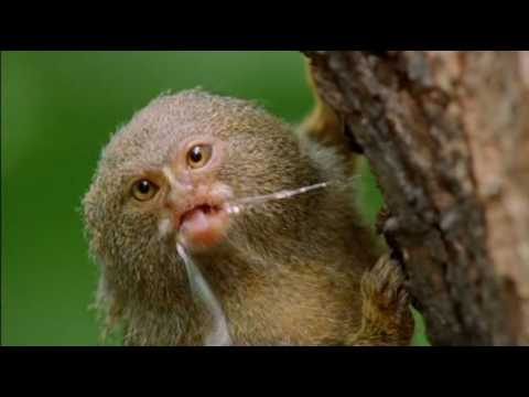 Natural World - Clever Monkeys (Part 1/6)