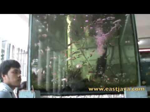 Ornamental Fish Market Surabaya