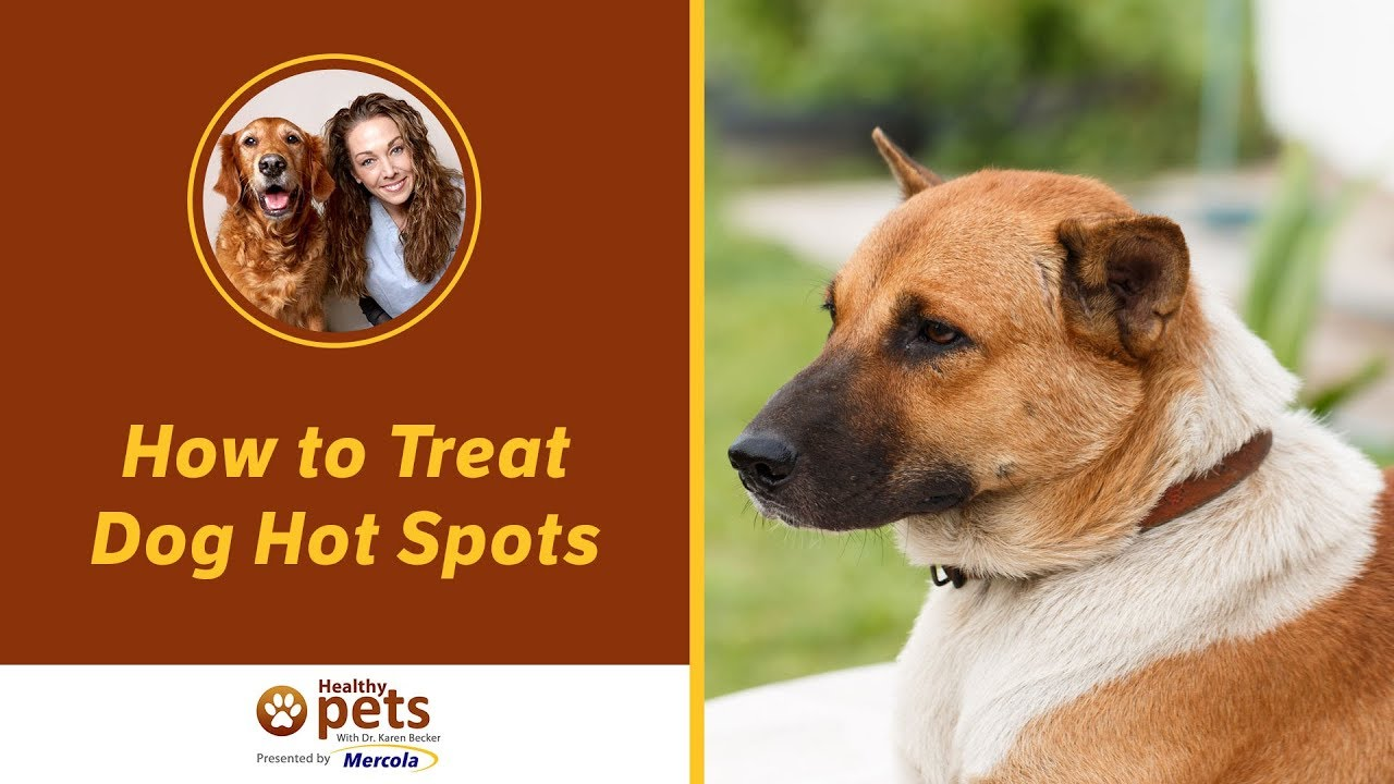 How To Treat Hot Spots On A Dog Naturally