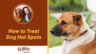 How To Treat Dog Hot Spots