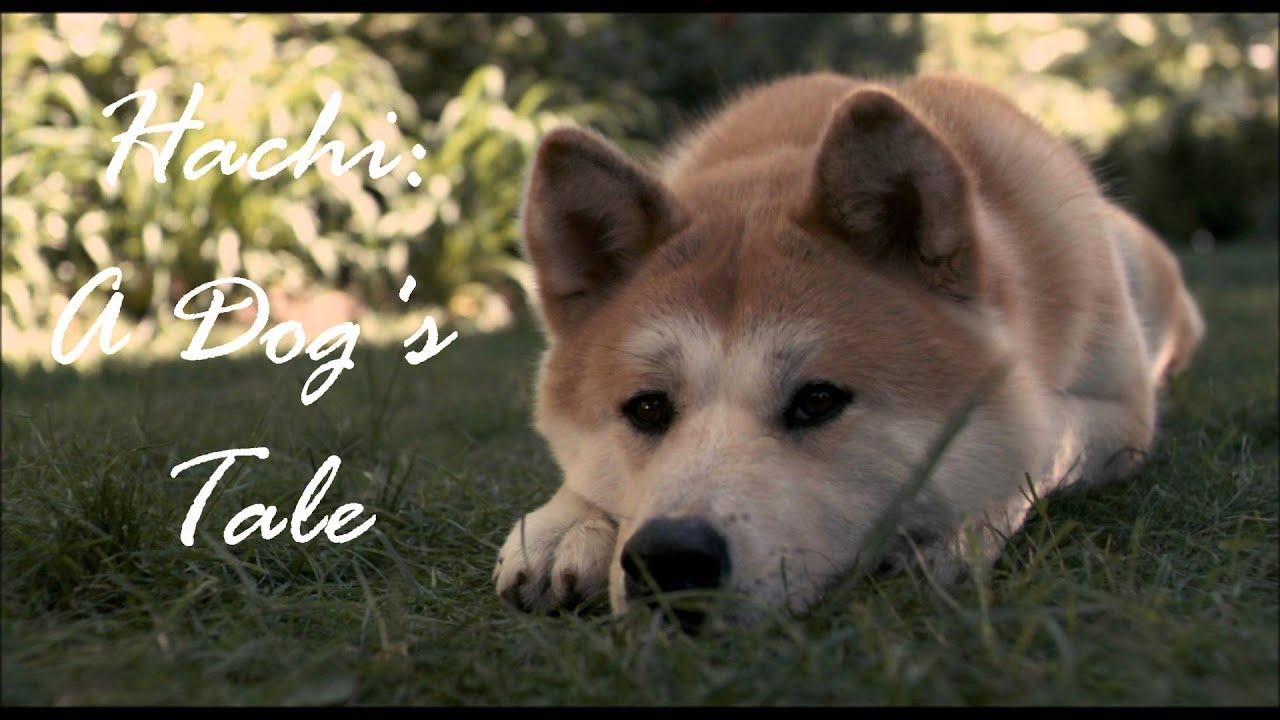 Hachi A Dog S Tale Goodbye