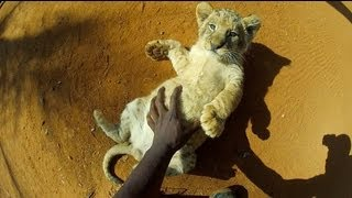 [GoPro HD- Baby Lion Hug and Cuddles] Video
