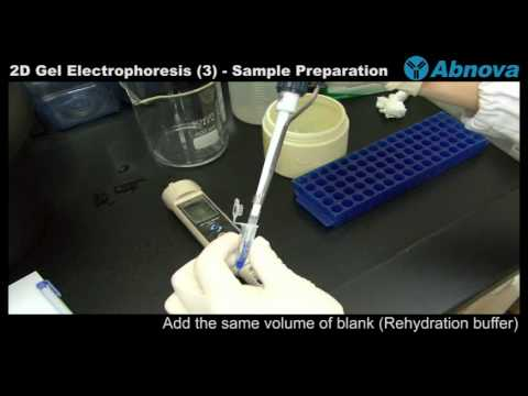2D Gel Electrophoresis (3) Sample Preparation