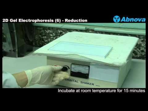 2D Gel Electrophoresis (6) Reduction & Alkylation