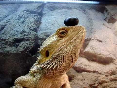 The Amazing Balancing Dragon! - YouTube