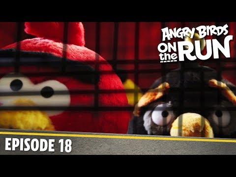Angry Birds na útěku - Ptačí klec