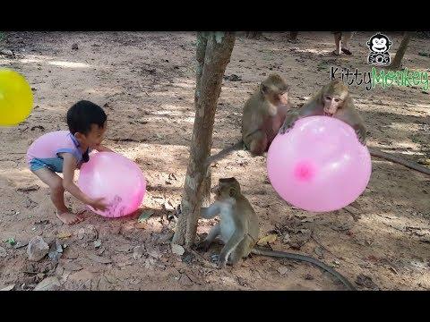monkey fight to get ballon from little boys, monkey hit little boy cry, funny video monkey