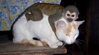 Monos molestando a perros y gatos