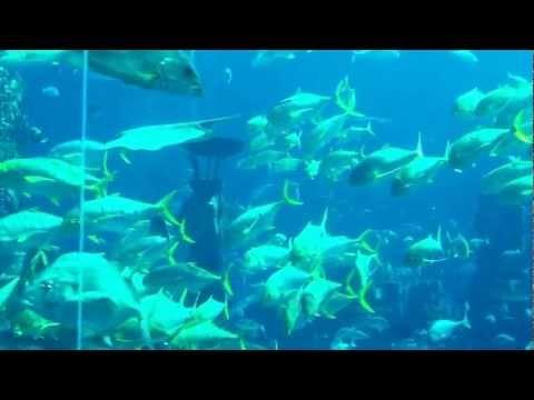 Jokalian,Mubi in Atlantis The Palm Jumeirah Dubai