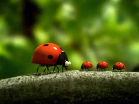 Vida de insetos..
