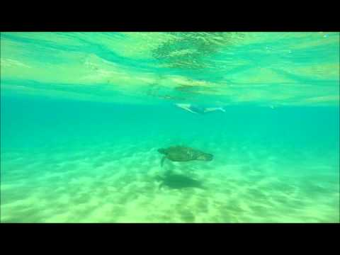 Swimming with a sea turtle in Maui