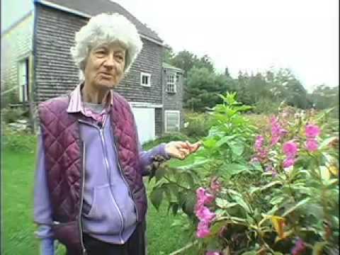 Lois Dodd: Maine Master