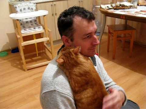 image vidéo Un chat fait un gros câlin à son maître