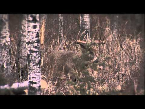 Whitetail Revolution Episode 7 – Extended Tecomate Trophy Tip