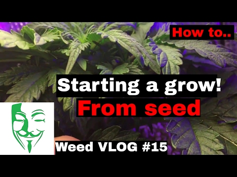 Micro grow THE SECRET Starting a Autoflower grow in a small CFL LED PC grow box tent Weed VLOG #15