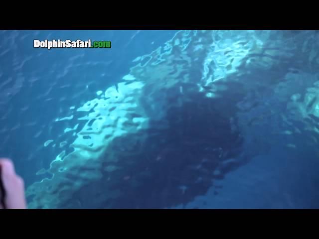 Friendly Fin Whale Mugs Dana Point Whale Watching Boat