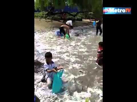 Fenomena ikan naik darat