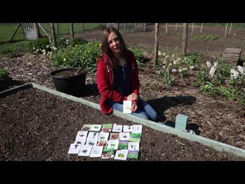 Easy polyculture of annual vegetables