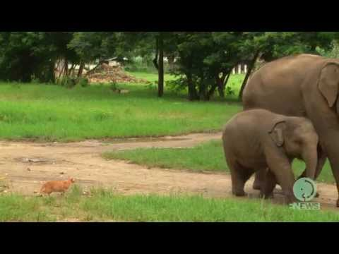 Baby elephant and a cat