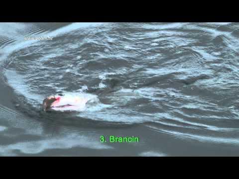 Ribolov Na Moru - Brancin, Luben - 4 Komada U Jednom Danu