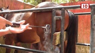 Herrraje de caballos con nitrógeno