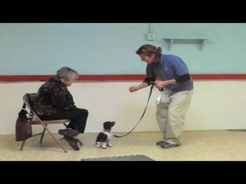 Puppy Training - Socialization - Wendi Faircloth