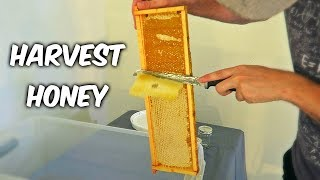Harvest Honey - Part 1