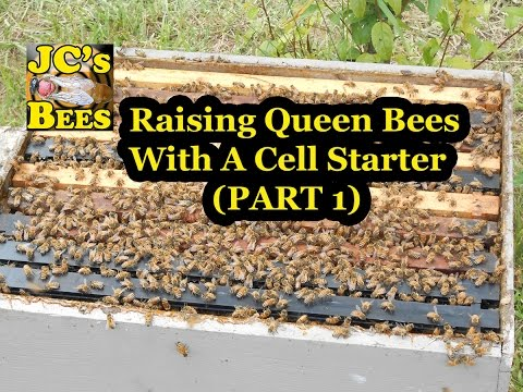 Raising Queens With A Cell Starter (part 1 queen rearing)
