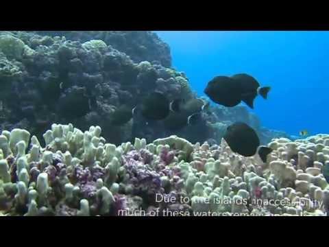 Pitcairn Islands - a paradise on earth