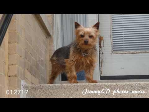 街拍宠物狗 对着汪星们拍其乐无穷