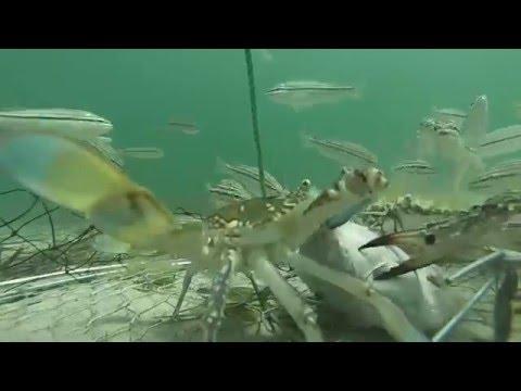 image vidéo Un journée dans un panier à crabes