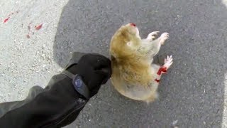 BIKER TRYING TO HELP DYING ANIMAL | BIKERS ARE NICE | Bikers Helping People & Animals | [Ep.#17]