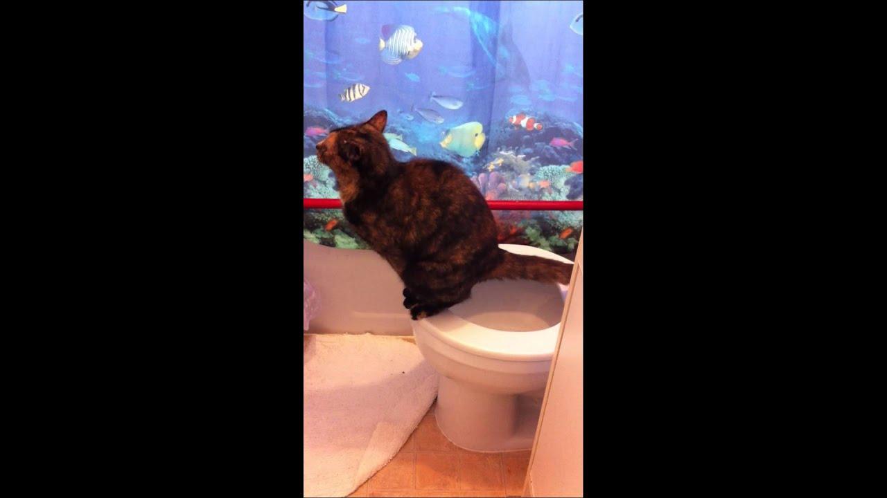 bengal cats hamilton ontario