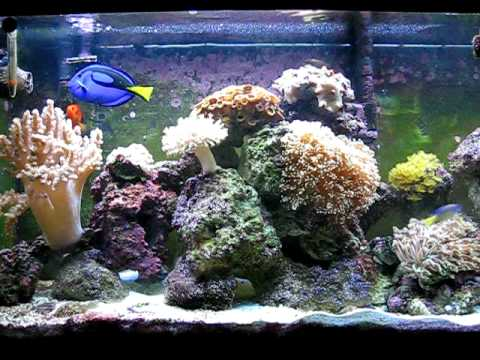 My Saltwater Reef Tank, 55 Gallon