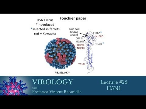 Virology 2014 lecture #25 - H5N1
