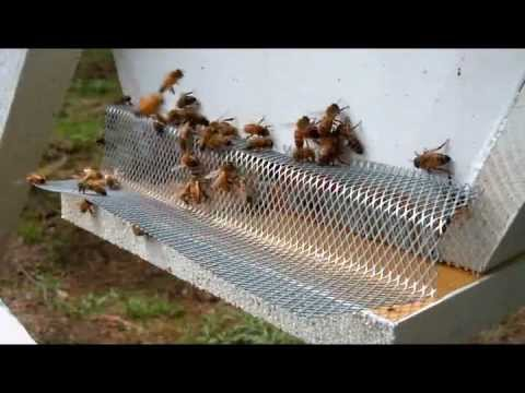 Honey Bee Robbing Protection