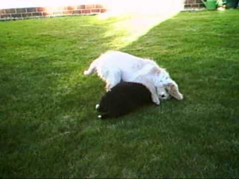 Walki psów :)