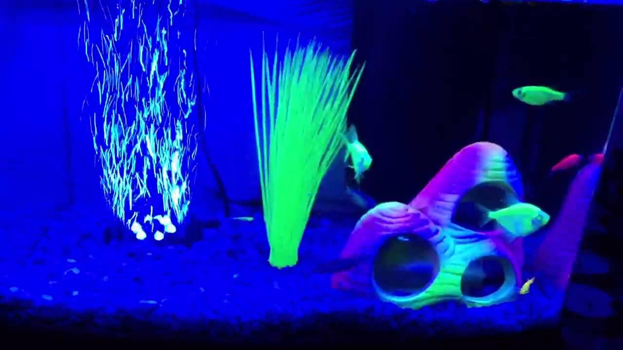 My 3 Gallon Glofish Tank Youtube