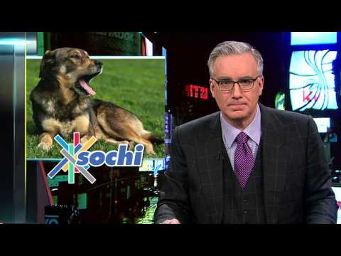 The Killing of Stray Dogs in Sochi