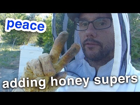 Beekeeping is kinda fun... When you don't feel like you're gonna die