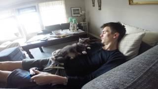 Gato fastidioso, no deja en paz a su dueño