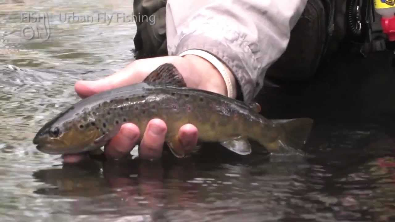 urban fly fishing youtube