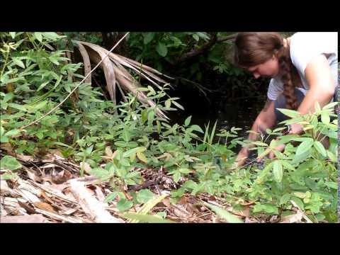 Hiking and Camping the St. Sebastian River Preserve Trail Florida