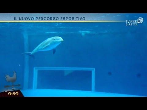 Un tuffo nell'acquario di Genova con Tv2000