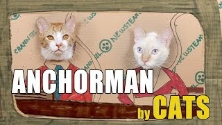Anchorman Re-enacted by Cats