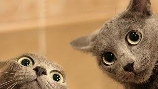 Videos De Risa De Gatos Chistosos - Videos Graciosos 2014