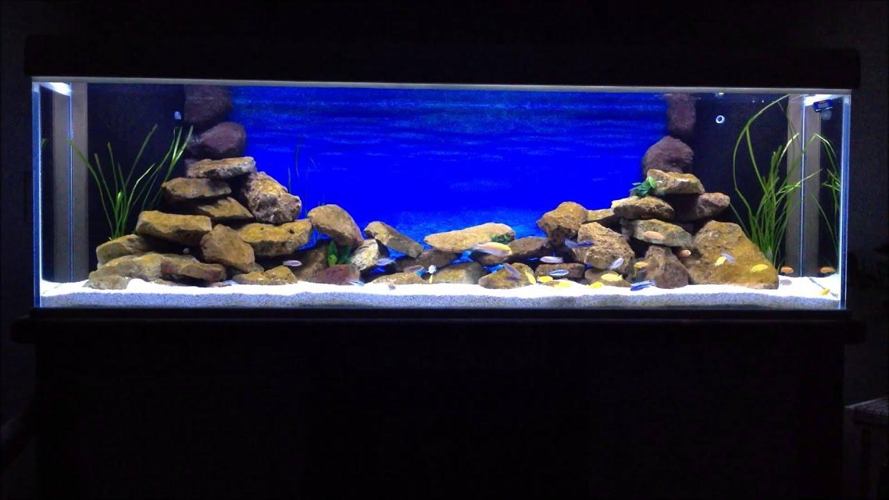 Malawi Aquarium LED Mbuna Cichliden 720l - YouTube