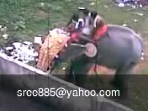 Kerala elephant attack youtube - photo#23