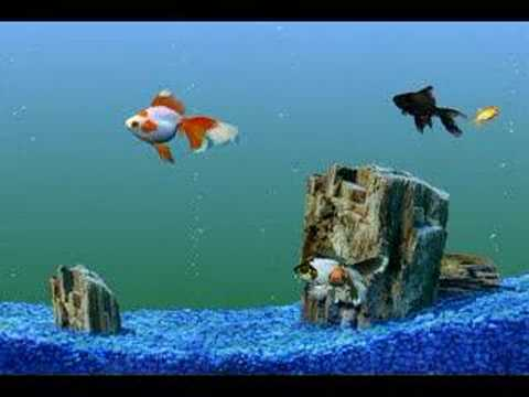 Goldfish aquarium tank swimming gold fish video clip youtube for Fish swimming video